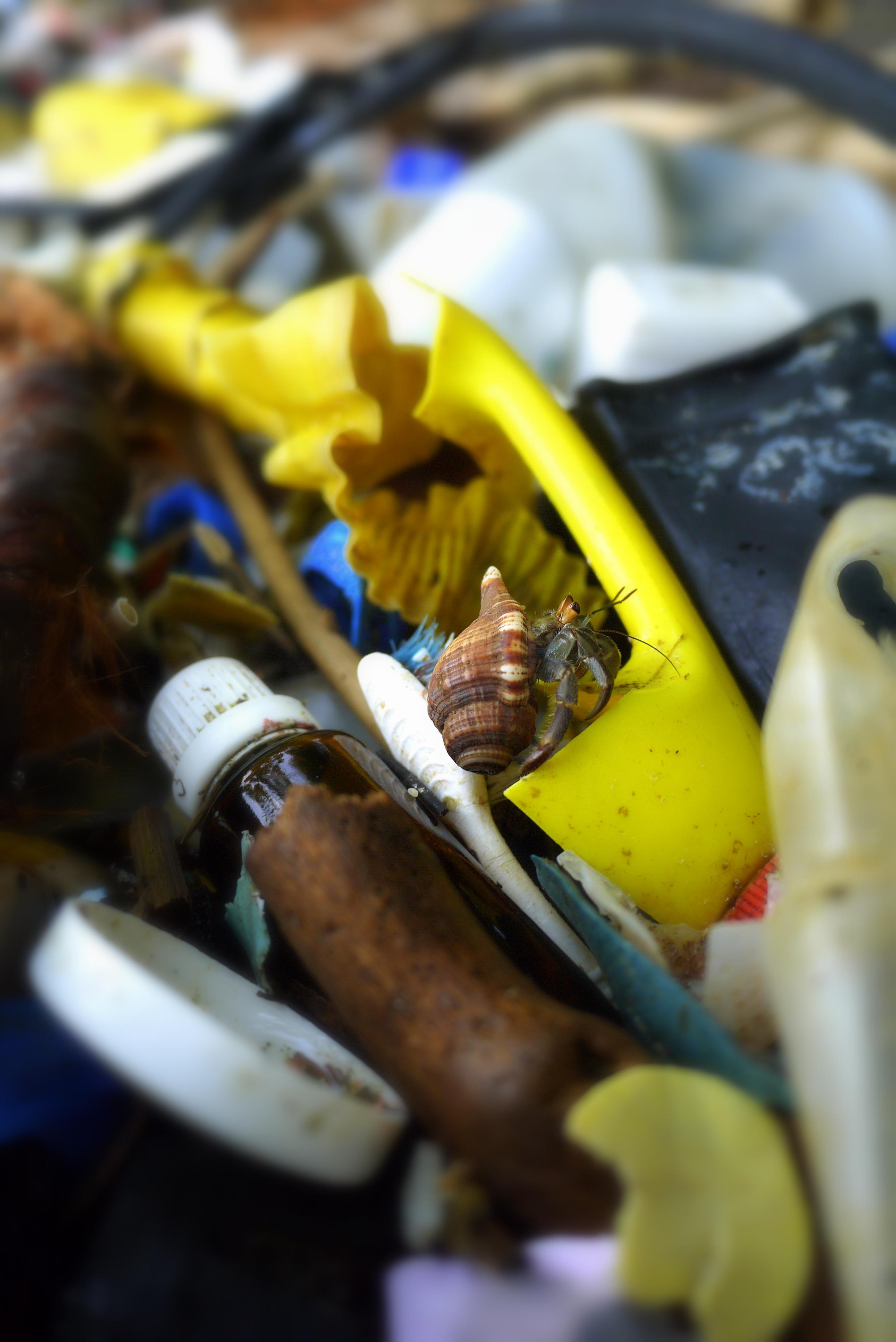 Crab in trash